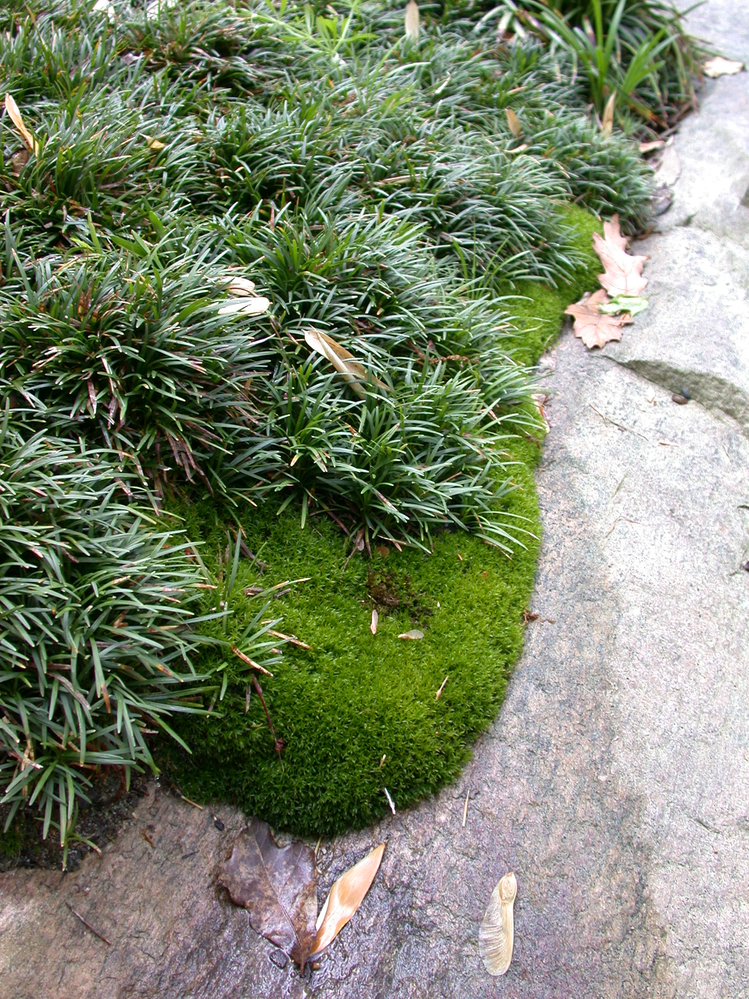 mossdetail.jpg